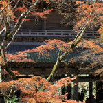 永源寺の紅葉、見頃
