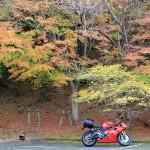 奥琵琶湖パークウェイ、落葉進む