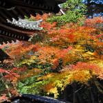 今熊野観音寺、紅葉見頃