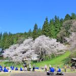 2015年臥龍桜ツーリング