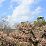 大阪城梅林と月ヶ瀬梅林