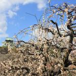 大阪城梅林と月ヶ瀬梅林を巡るツーリング