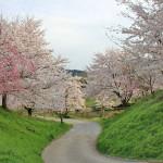 篠山城址の桜、幻日、環天頂アーク