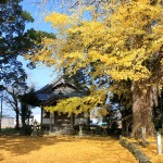 丹波国分寺の紅葉