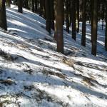 残雪の皆子山登山