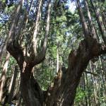 岐阜県「モネの池」ツーリング2(株杉の森編)