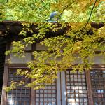 嵯峨野、護法堂弁財天の紅葉