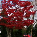 紅葉の嵐山高雄パークウェイ、ツーリング