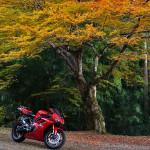 京都美山の大原神社の紅葉、見ごろ