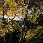 金蔵寺の残り紅葉