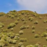 シロヤシオ咲く竜ヶ岳へ