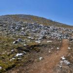 4月フクジュソウ咲く霊仙山登山
