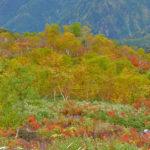 10月 紅葉の唐松岳-不帰ノ嶮山行報告(2日目-2 八方尾根下山)