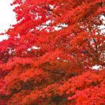 高野山と高野龍神スカイラインの紅葉