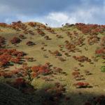 竜ヶ岳(三重県)、シロヤシオの紅葉見ごろ