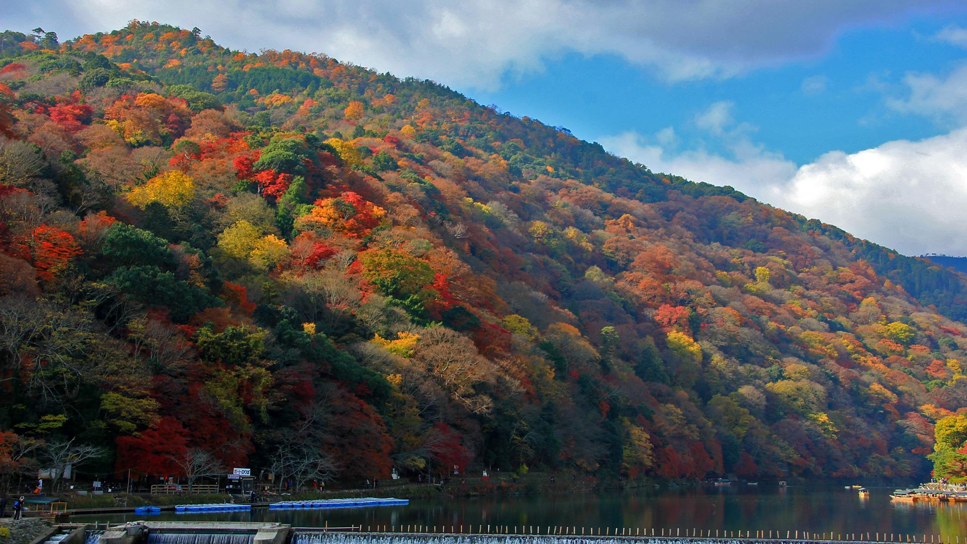 嵐山:紅葉、京都 壁紙 | 写真 | フリー